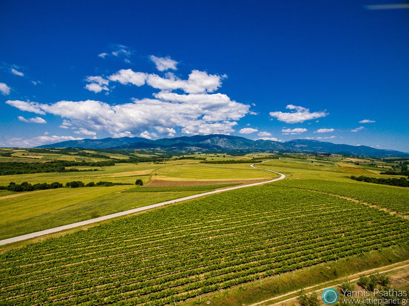 Vineyards of Goumenissa Aerial Photographer - Drone Photography