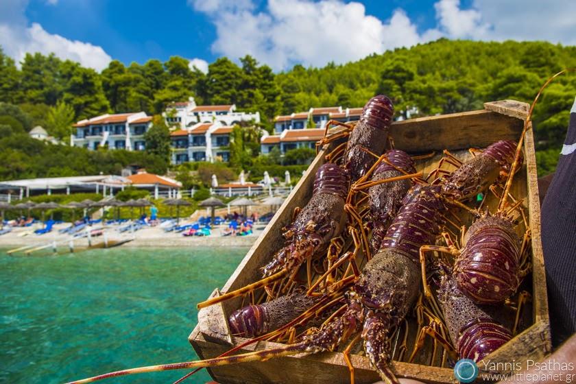 Φωτογραφία Φαγητού, Επαγγελματικες Φωτογραφίες Φαγητών - Ζωντανός Αστακός