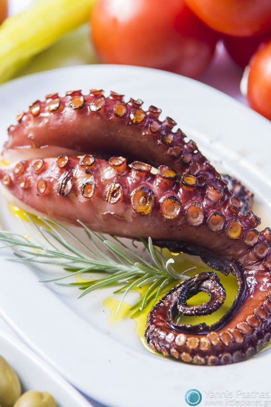 Octopus Grill - Gastronomy Photo