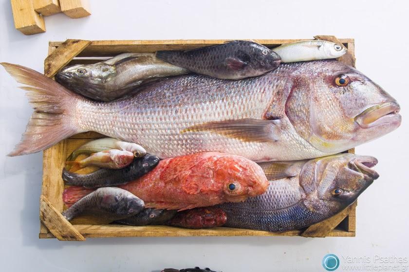 Επαγγελματικες Φωτογραφίες Φαγητών, Φωτογράφος Φαγητού - Κατάλογος Ψαριών